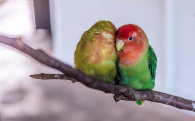 aplikacje mobilne na codzień, papugu
